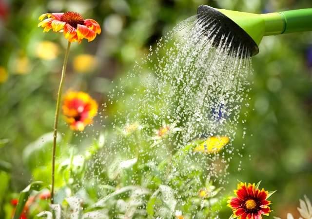 vegetable garden care - water regularly