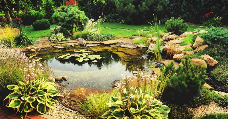 MorningChores & How to Build a Beautiful Backyard Pond in 11 Steps