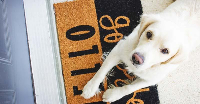32 Impressive Yet Inexpensive Diy Doormats You Ll Love
