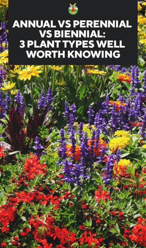 Annual Vs Perennial Vs Biennial 3 Plant Types You Should Know