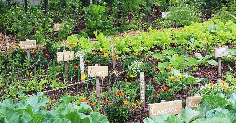 How to plan a medicinal herb garden - Homestead Lady