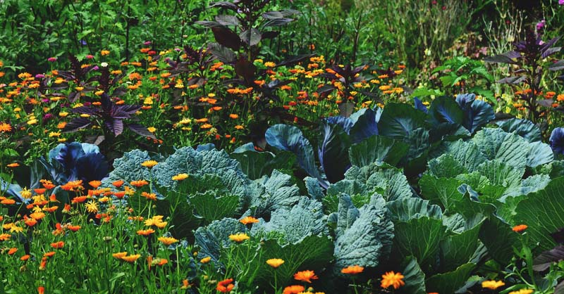 Edible Landscaping How To Start A Beautiful Perennial Plot For Food