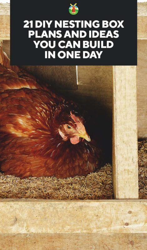 single Chicken//Poultry Nest Box broody box