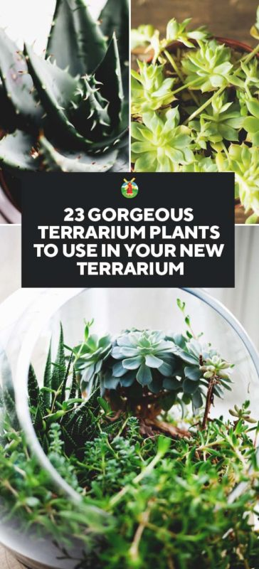 23 Gorgeous Terrarium Plants To Use In Your New Terrarium