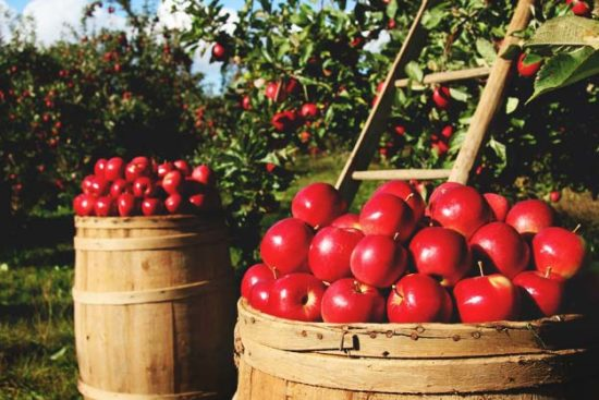 3 Proven Methods to Dehydrating Apples Every Gardener Should Know