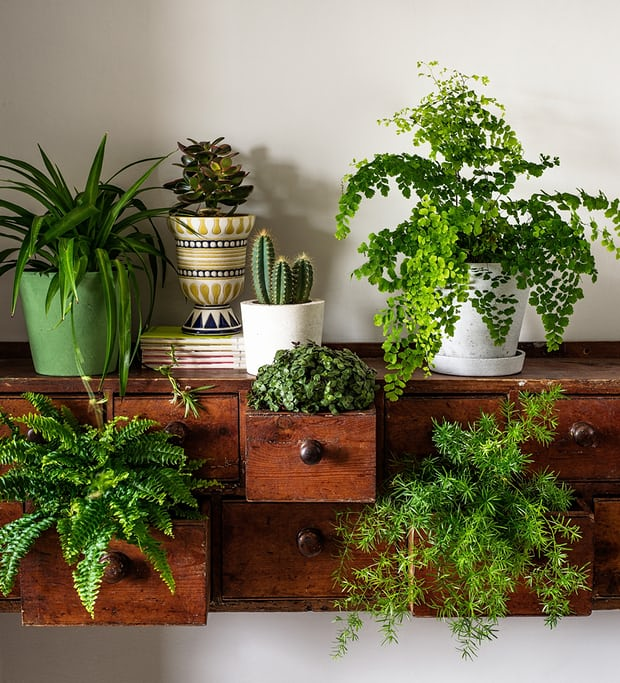 drawers indoor vertical garden