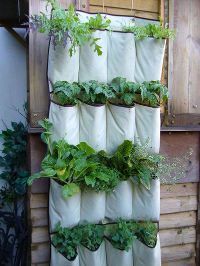 shoe bag indoor vertical garden