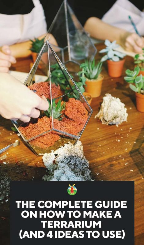make a terrarium