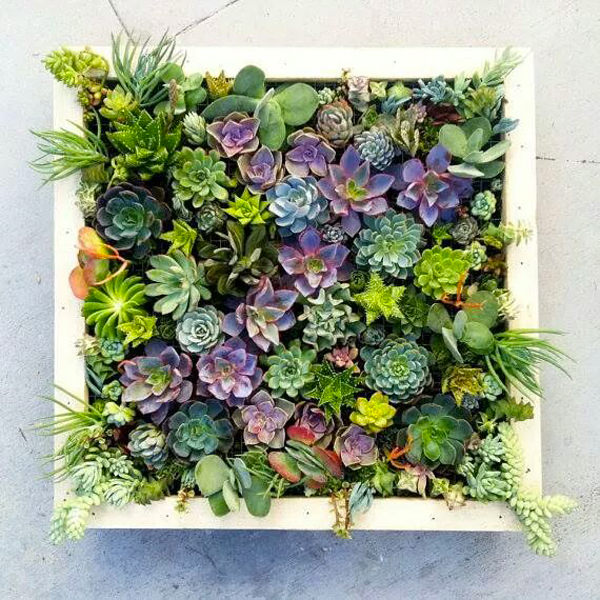 indoor vertical garden with succulents