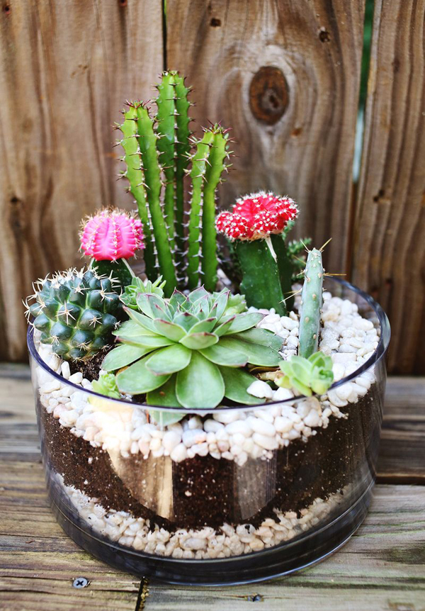 The Complete Guide On How To Make A Terrarium And 4 Ideas To Use