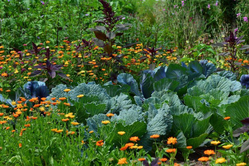 Planting Zones Map | Find Your Gardening Zones by ZIP Code