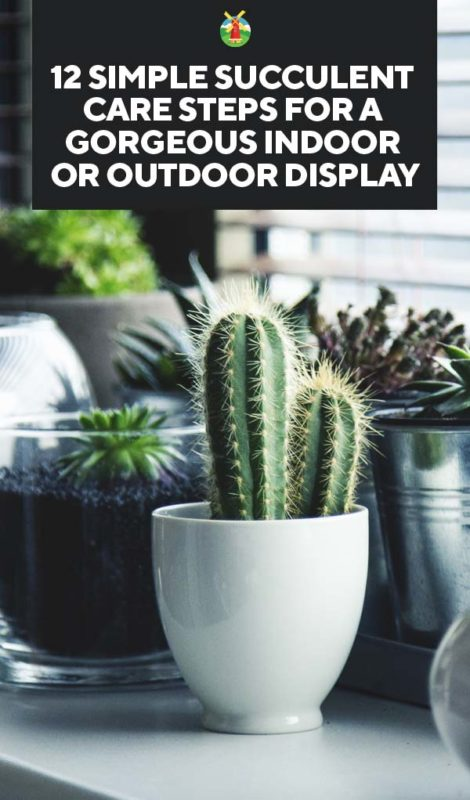 12 Steps Succulent Care For A Gorgeous Indoor Or Outdoor Display