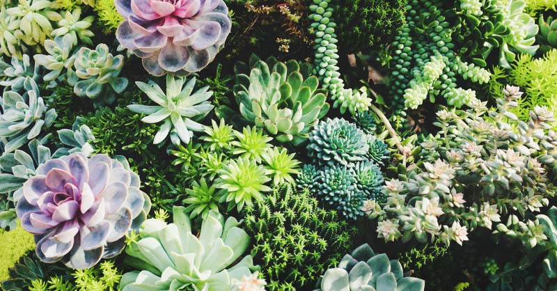 29 Types of Succulent Plants for Your Terrarium, Indoor Decor, or Cactus  Garden