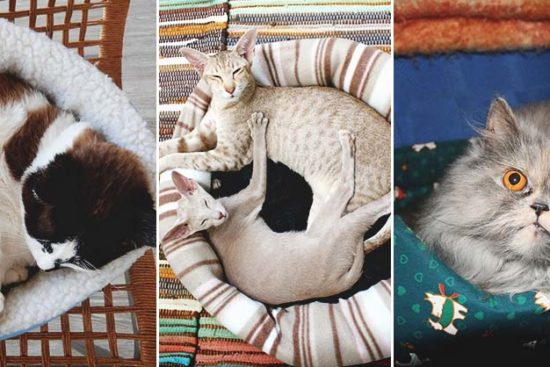 30 DIY Cat Bed Tutorials for Your Furry Feline