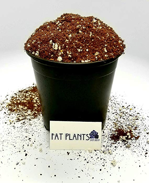 Fat Plants San Diego 1-Gallon Succulent Soil
