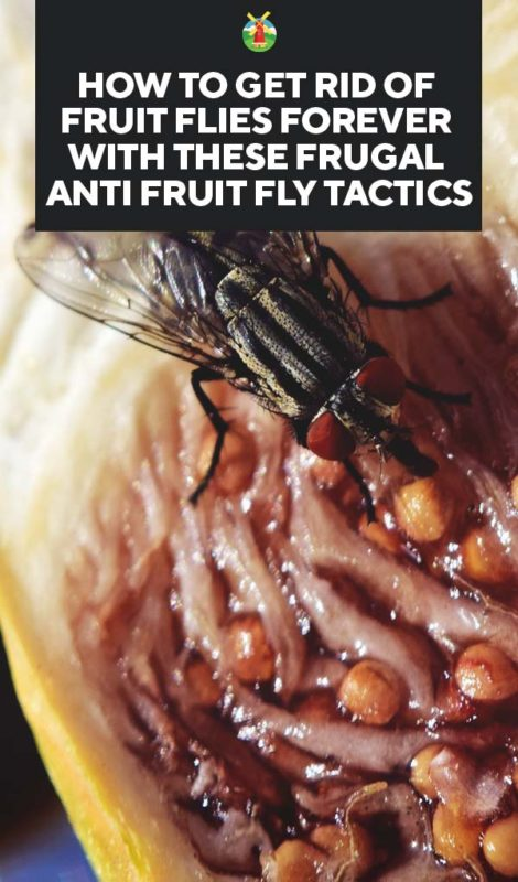 How to Get Rid of Fruit Flies Forever with These Frugal Tactics