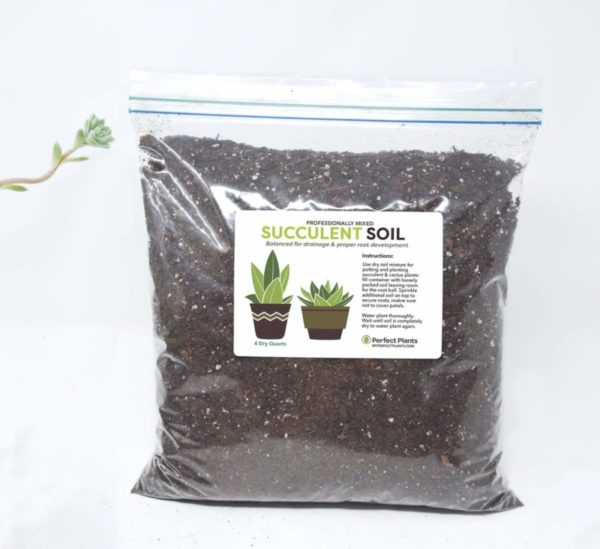 Perfect Plants 4-quart Succulent Soil Mix