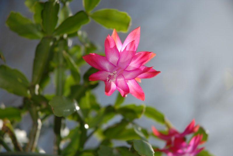 29 Types Of Succulent Plants For Your Terrarium Indoor Decor Or