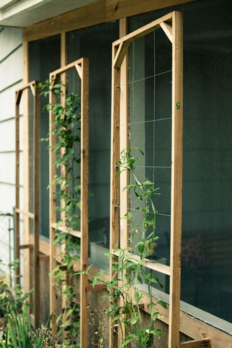 23 Functional Cucumber Trellis Ideas Guaranteed To Boost