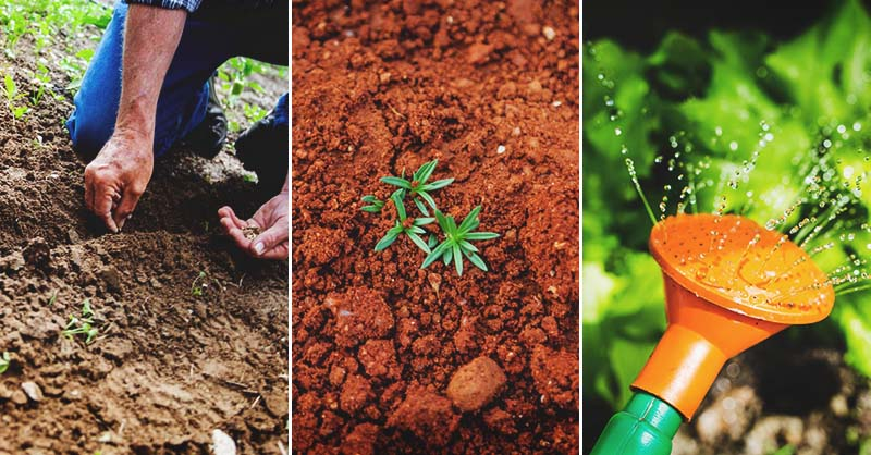 Fall Gardening How To Plan And Start A Fall Garden At The Right Tim