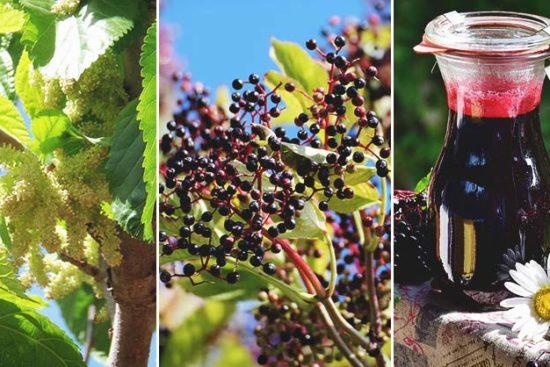 10 Easy Steps to Make Homemade Elderberry Wine