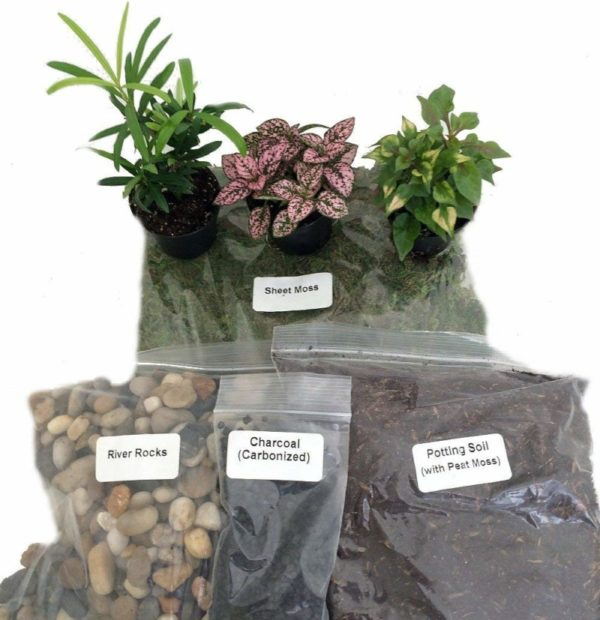 Hirt's Gardens Terrarium/Fairy Garden Kit with 3 Plants