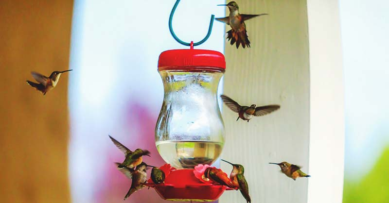 16 DIY Homemade Hummingbird Feeder