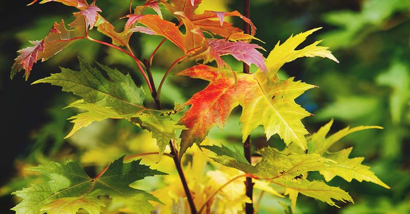 32 Of The Best Fast Growing Trees To Plant In Your Garden