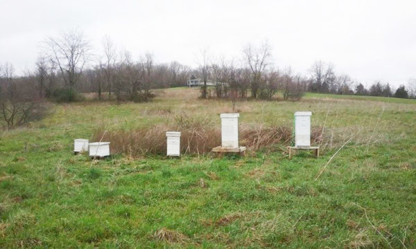 Hives in a field near an apple orchard
