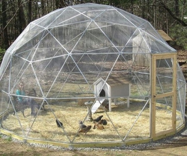 Geodesic-Chicken-Coop