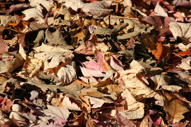 leaves for mulch