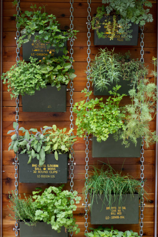 Create A Shared Herb Garden Along A Fence In A Public Area Wayblaze