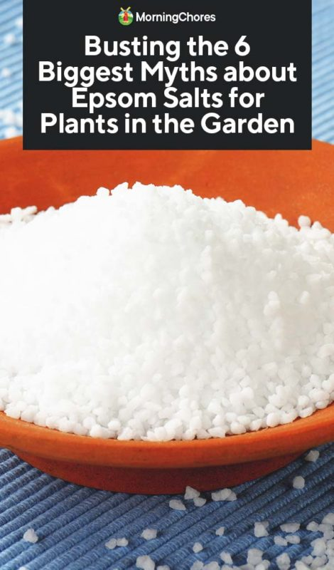 Busting The 6 Biggest Myths About Epsom Salts For Plants In The Garden