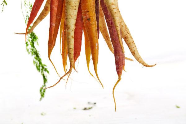 Carrots roots
