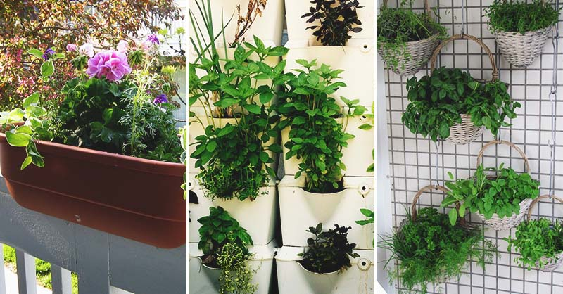 Diy Vertical Herb Garden Ideas Have Fresh Herbs Hand