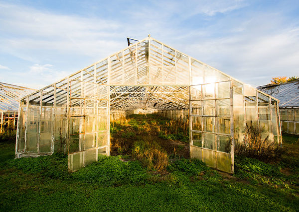 The frame of an old greenhouse with broken glass panes
