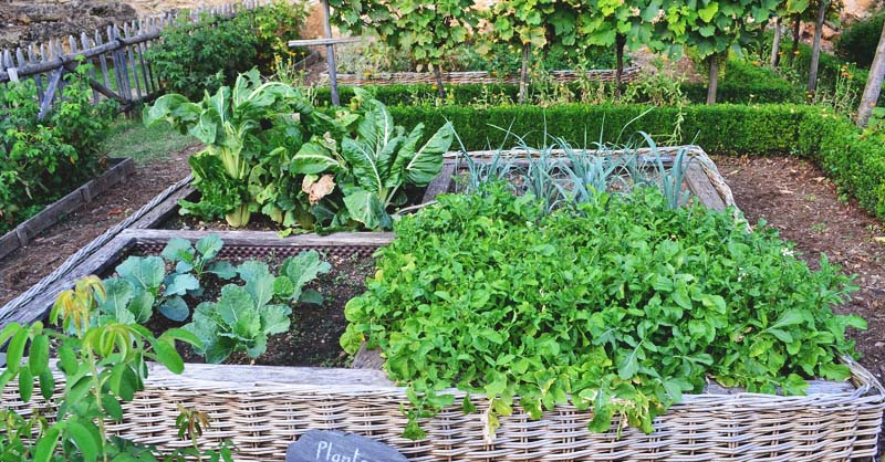 How To Create A Potager Garden An Aesthetically Pleasing Kitchen