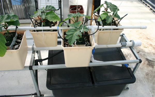 Top feed Hydroponic system setup