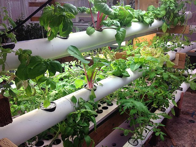 Hydroponic system featuring artificial light