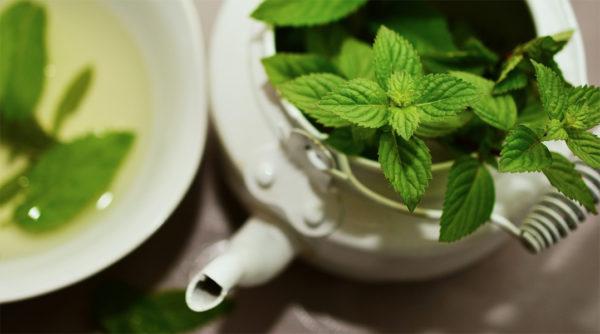 Mint from an herb garden in a pitcher