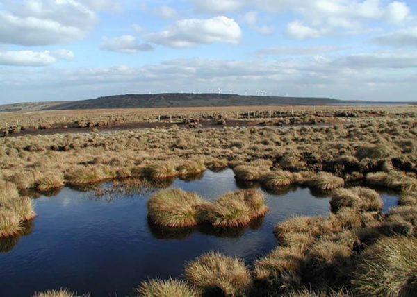 Peat moss in a peat bog