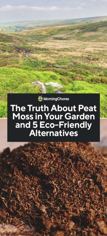 The Truth About Peat Moss In Your Garden And 5 Eco Friendly