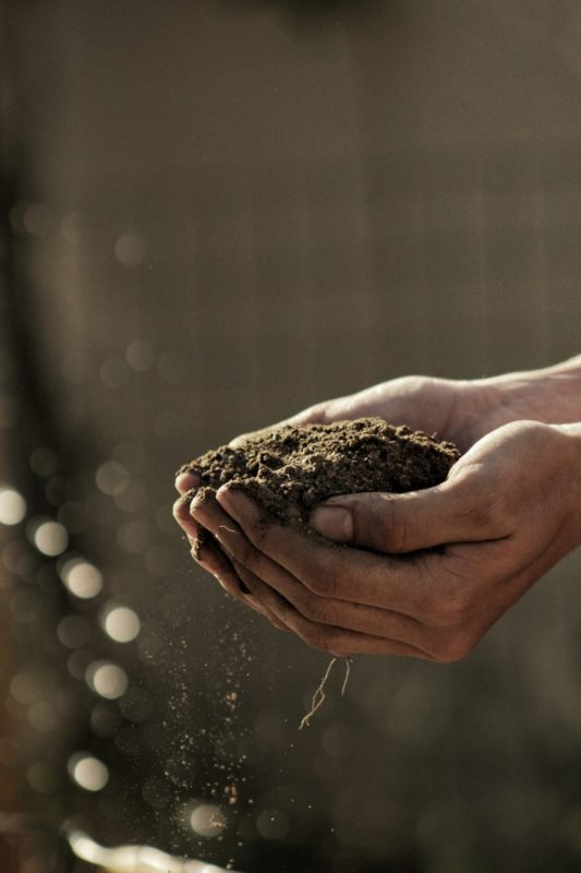 Soil cupped in a pair of hands