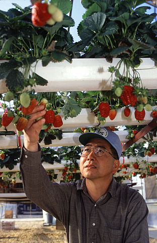 Hydroponic system maintenance