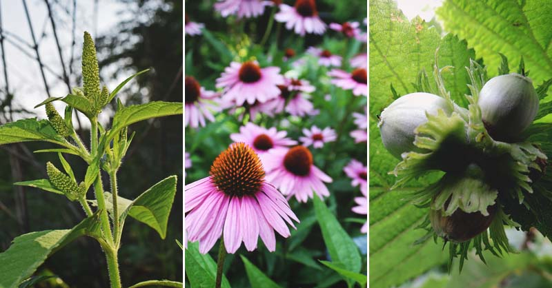 50 Edible Wild Plants You Can Forage For A Free Meal