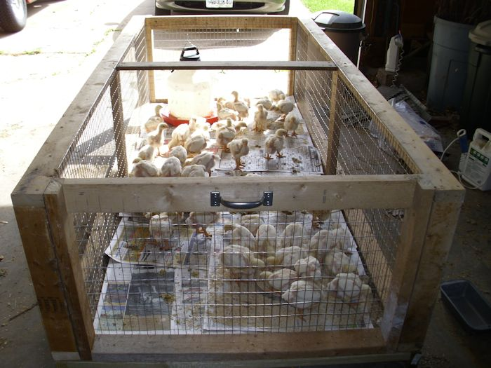20 DIY Chicken Brooders from the Low