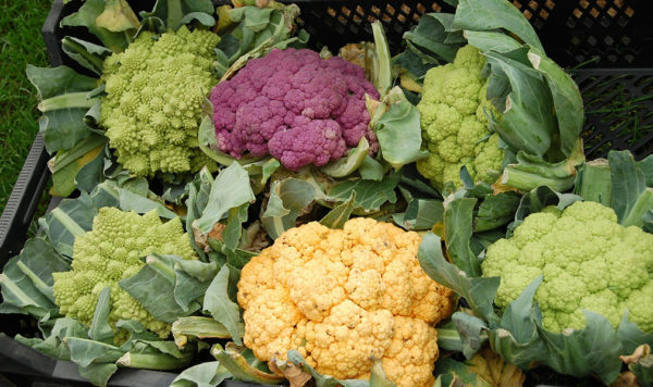 Cauliflower color varieties