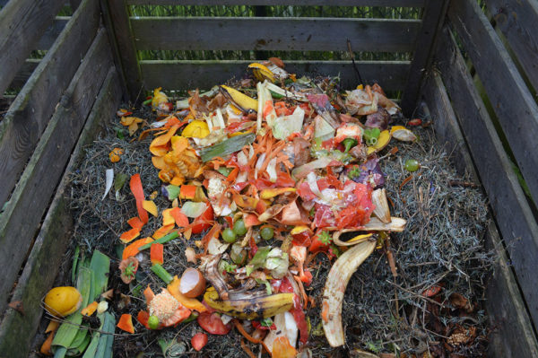 Veggies on the top of a compost pile