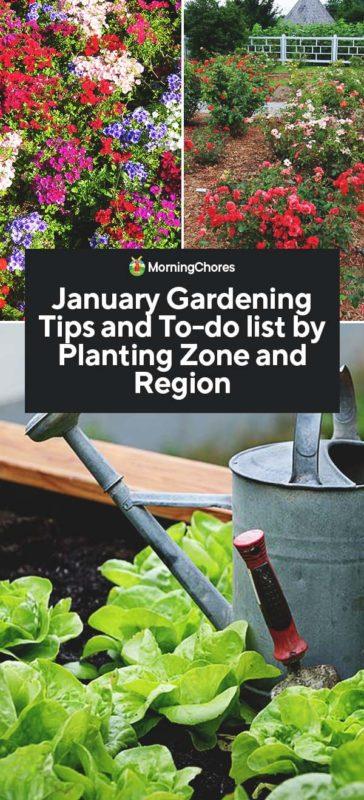 January Gardening Chores