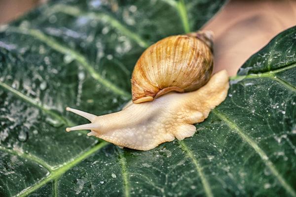 Snail crawling across a leaf